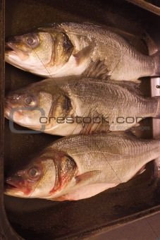 three sea bass