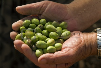 olives in old man's hand
