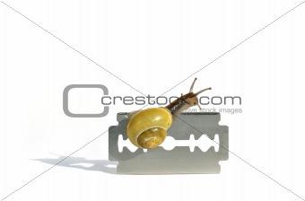 Careful snail