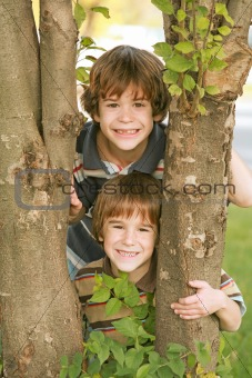 Boys in a Tree