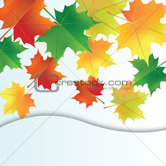 autumn leaves on the white background