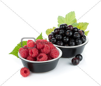 Black currant and raspberry