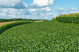 Soybean and Corn Crops