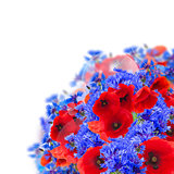 poppy and corn flowers