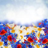 summer field flowers poppy, daisy and corn flowers