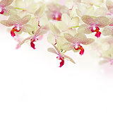 tender pink  orchid flowers with butterflies