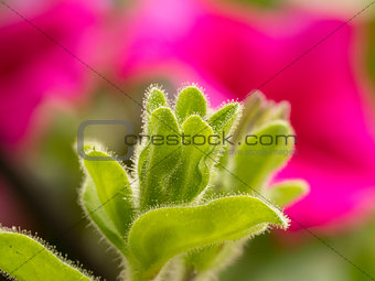 Beautiful pink background blur