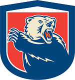 Grizzly Bear Swiping Paw Shield Retro