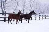 Horse walking in winter