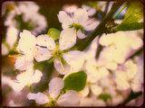 Grunge Spring Blossom