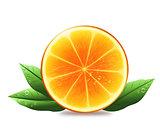Half of orange with leaves