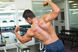 Rear view of a muscular man flexing muscles