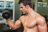 Shirtless muscular man exercising with dumbbell