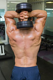 Rear view of a shirtless muscular man exercising with dumbbell