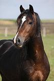 Portrait of nice brown stallion