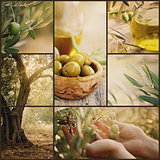 Olives collage