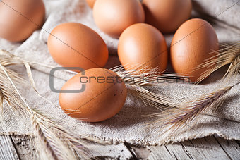 fresh brown eggs and wheat ears