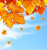 Beautiful autumn tree leaves background border