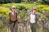 Hiking couple standing with walking poles