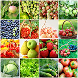 Fruits, vegetables, berries