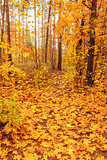Colorful Autumn Trees In Forest