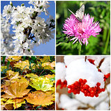 Four seasons collage - spring, summer, autumn and winter