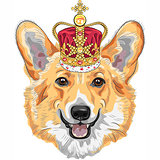 vector sketch dog Pembroke Welsh corgi smiling in gold crown