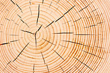 annual tree rings, fine texture closeup