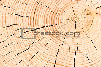 background macro shot cut down a tree with cracks