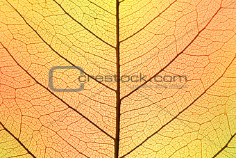 Background of Autumn colors Leaf cell structure - natural textur