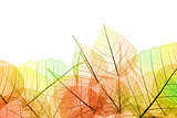 Border of Autumn color transparent Leaves - isolated on white