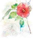 Watercolor Image Of  Hibiscus Flower
