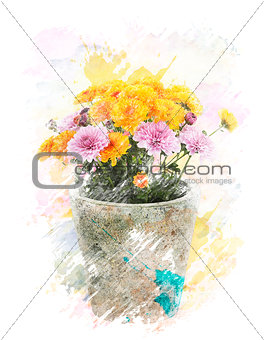 Watercolor Image Of  Autumn Chrysanthemums