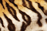 detail on tiger real black stripes