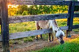 Grazing pony
