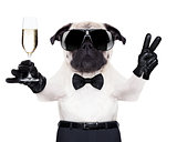 champagne glass dog