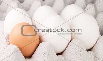 Five White And One Brown Eggs On Tray