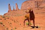 red dog in desert