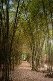 Bamboo Road - Trang Bang Tay Ninh