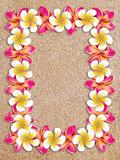 Frangipani frame on sand
