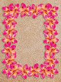 Pink frangipani frame on sand