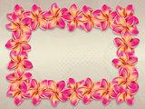 Pink plumeria flowers frame
