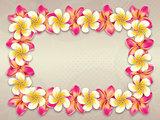 Plumeria flowers frame