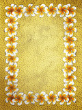 White frangipani flowers frame on sand