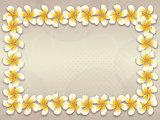 White plumeria flowers frame