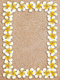 White plumeria frame on sand