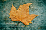 autumn leaf on a weathered wooden background