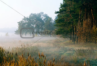autumn morning by a woodside