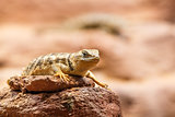 Solitary lizard sitting on a rock