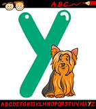 letter y for yorkshire terrier dog